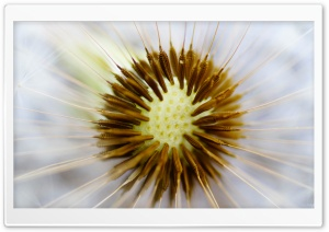 Dandelion Seeds Macro HD Wide Wallpaper for Widescreen