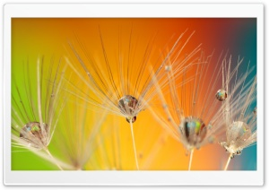 Dandelion Seeds Macro, Colorful Background HD Wide Wallpaper for Widescreen