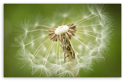 Dandelion Seeds Macro, Green background ❤ 4K UHD Wallpaper for Wide 16:10 5:3 Widescreen WHXGA WQXGA WUXGA WXGA WGA ; 4K UHD 16:9 Ultra High Definition 2160p 1440p 1080p 900p 720p ; Standard 4:3 5:4 3:2 Fullscreen UXGA XGA SVGA QSXGA SXGA DVGA HVGA HQVGA ( Apple PowerBook G4 iPhone 4 3G 3GS iPod Touch ) ; Tablet 1:1 ; iPad 1/2/Mini ; Mobile 4:3 5:3 3:2 16:9 5:4 - UXGA XGA SVGA WGA DVGA HVGA HQVGA ( Apple PowerBook G4 iPhone 4 3G 3GS iPod Touch ) 2160p 1440p 1080p 900p 720p QSXGA SXGA ;