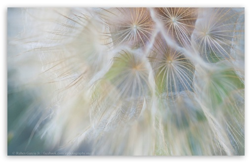 Dandelion Wish ❤ 4K UHD Wallpaper for Wide 16:10 5:3 Widescreen WHXGA WQXGA WUXGA WXGA WGA ; 4K UHD 16:9 Ultra High Definition 2160p 1440p 1080p 900p 720p ; UHD 16:9 2160p 1440p 1080p 900p 720p ; Standard 4:3 5:4 3:2 Fullscreen UXGA XGA SVGA QSXGA SXGA DVGA HVGA HQVGA ( Apple PowerBook G4 iPhone 4 3G 3GS iPod Touch ) ; Tablet 1:1 ; iPad 1/2/Mini ; Mobile 4:3 5:3 3:2 16:9 5:4 - UXGA XGA SVGA WGA DVGA HVGA HQVGA ( Apple PowerBook G4 iPhone 4 3G 3GS iPod Touch ) 2160p 1440p 1080p 900p 720p QSXGA SXGA ;