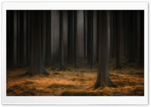Dark Enchanted Forest HD Wide Wallpaper for 4K UHD Widescreen desktop & smartphone
