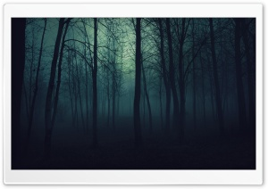 Dark Forest Ultra HD Wallpaper for 4K UHD Widescreen desktop, tablet & smartphone
