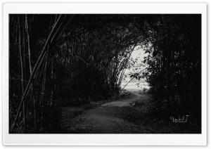 Dark Forest Ultra HD Wallpaper for 4K UHD Widescreen desktop, tablet & smartphone