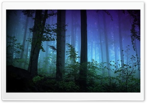 Dark Forest HD Wide Wallpaper for Widescreen