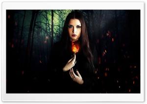 Dark Forest HD Wide Wallpaper for Widescreen