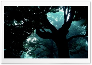 Dark Forest Tree HD Wide Wallpaper for Widescreen