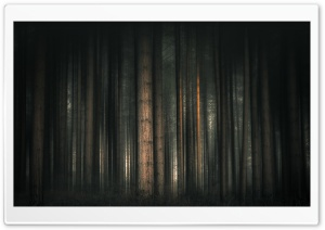 Dark Forest, Trees Ultra HD Wallpaper for 4K UHD Widescreen desktop, tablet & smartphone