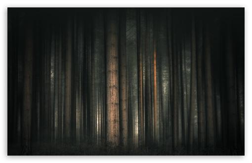 Dark Forest, Trees UltraHD Wallpaper for Wide 16:10 5:3 Widescreen WHXGA WQXGA WUXGA WXGA WGA ; UltraWide 21:9 24:10 ; 8K UHD TV 16:9 Ultra High Definition 2160p 1440p 1080p 900p 720p ; UHD 16:9 2160p 1440p 1080p 900p 720p ; Standard 4:3 5:4 3:2 Fullscreen UXGA XGA SVGA QSXGA SXGA DVGA HVGA HQVGA ( Apple PowerBook G4 iPhone 4 3G 3GS iPod Touch ) ; Smartphone 16:9 3:2 5:3 2160p 1440p 1080p 900p 720p DVGA HVGA HQVGA ( Apple PowerBook G4 iPhone 4 3G 3GS iPod Touch ) WGA ; Tablet 1:1 ; iPad 1/2/Mini ; Mobile 4:3 5:3 3:2 16:9 5:4 - UXGA XGA SVGA WGA DVGA HVGA HQVGA ( Apple PowerBook G4 iPhone 4 3G 3GS iPod Touch ) 2160p 1440p 1080p 900p 720p QSXGA SXGA ; Dual 16:10 5:3 16:9 4:3 5:4 3:2 WHXGA WQXGA WUXGA WXGA WGA 2160p 1440p 1080p 900p 720p UXGA XGA SVGA QSXGA SXGA DVGA HVGA HQVGA ( Apple PowerBook G4 iPhone 4 3G 3GS iPod Touch ) ;