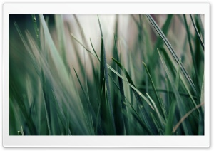Dark Green Grass HD Wide Wallpaper for Widescreen