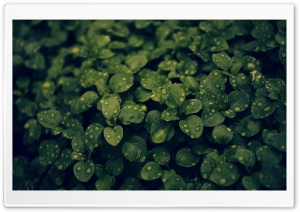 Dark Green Plant HD Wide Wallpaper for Widescreen