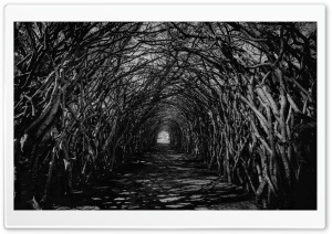 Dark Hedge Tunnel Spooky HD Wide Wallpaper for 4K UHD Widescreen desktop & smartphone
