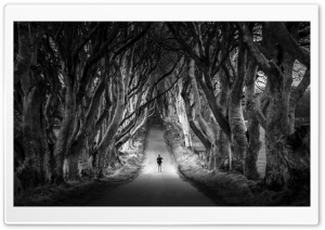 Dark Hedges, Avenue of Beech Trees, Northern Ireland HD Wide Wallpaper for 4K UHD Widescreen desktop & smartphone