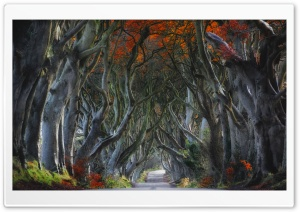 Dark Hedges, Beech Trees, Northern Ireland Ultra HD Wallpaper for 4K UHD Widescreen desktop, tablet & smartphone