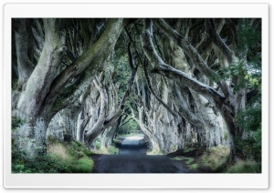 Dark Hedges, Northern Ireland Ultra HD Wallpaper for 4K UHD Widescreen desktop, tablet & smartphone
