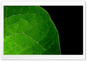 Dark Leaf HD Wide Wallpaper for 4K UHD Widescreen desktop & smartphone