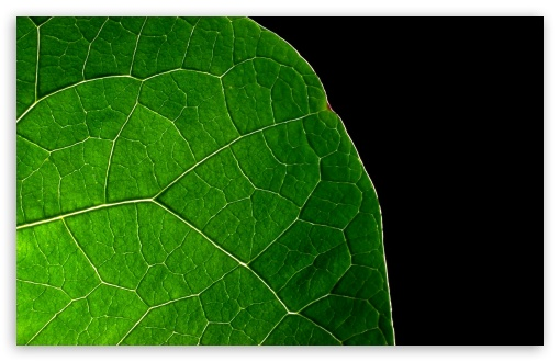 Dark Leaf HD wallpaper for Wide 16:10 5:3 Widescreen WHXGA WQXGA WUXGA WXGA WGA ; HD 16:9 High Definition WQHD QWXGA 1080p 900p 720p QHD nHD ; Standard 4:3 5:4 3:2 Fullscreen UXGA XGA SVGA QSXGA SXGA DVGA HVGA HQVGA devices ( Apple PowerBook G4 iPhone 4 3G 3GS iPod Touch ) ; Tablet 1:1 ; iPad 1/2/Mini ; Mobile 4:3 5:3 3:2 16:9 5:4 - UXGA XGA SVGA WGA DVGA HVGA HQVGA devices ( Apple PowerBook G4 iPhone 4 3G 3GS iPod Touch ) WQHD QWXGA 1080p 900p 720p QHD nHD QSXGA SXGA ;