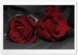 Dark Red Roses HD Wide Wallpaper for Widescreen