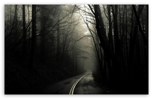 Download Dark Road Forest HD Wallpaper