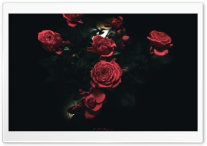 Dark Roses HD Wide Wallpaper for Widescreen