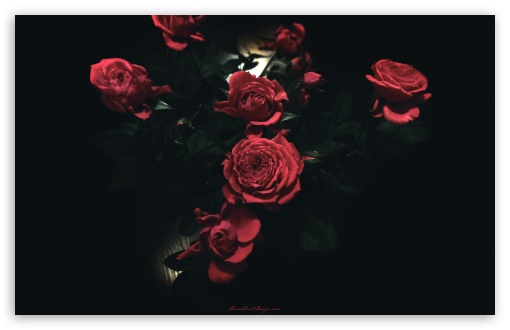 Dark Roses ❤ 4K UHD Wallpaper for Wide 16:10 5:3 Widescreen WHXGA WQXGA WUXGA WXGA WGA ; 4K UHD 16:9 Ultra High Definition 2160p 1440p 1080p 900p 720p ; Standard 4:3 5:4 3:2 Fullscreen UXGA XGA SVGA QSXGA SXGA DVGA HVGA HQVGA ( Apple PowerBook G4 iPhone 4 3G 3GS iPod Touch ) ; iPad 1/2/Mini ; Mobile 4:3 5:3 3:2 16:9 5:4 - UXGA XGA SVGA WGA DVGA HVGA HQVGA ( Apple PowerBook G4 iPhone 4 3G 3GS iPod Touch ) 2160p 1440p 1080p 900p 720p QSXGA SXGA ;