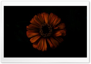 Dark Shadow Flower HD Wide Wallpaper for Widescreen