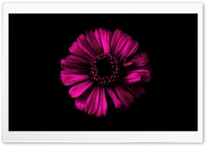 Dark Shadow Pink HD Wide Wallpaper for Widescreen