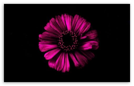 Dark Shadow Pink UltraHD Wallpaper for Wide 16:10 5:3 Widescreen WHXGA WQXGA WUXGA WXGA WGA ; UltraWide 21:9 24:10 ; 8K UHD TV 16:9 Ultra High Definition 2160p 1440p 1080p 900p 720p ; UHD 16:9 2160p 1440p 1080p 900p 720p ; Standard 4:3 5:4 3:2 Fullscreen UXGA XGA SVGA QSXGA SXGA DVGA HVGA HQVGA ( Apple PowerBook G4 iPhone 4 3G 3GS iPod Touch ) ; Smartphone 16:9 3:2 5:3 2160p 1440p 1080p 900p 720p DVGA HVGA HQVGA ( Apple PowerBook G4 iPhone 4 3G 3GS iPod Touch ) WGA ; Tablet 1:1 ; iPad 1/2/Mini ; Mobile 4:3 5:3 3:2 16:9 5:4 - UXGA XGA SVGA WGA DVGA HVGA HQVGA ( Apple PowerBook G4 iPhone 4 3G 3GS iPod Touch ) 2160p 1440p 1080p 900p 720p QSXGA SXGA ; Dual 16:10 5:3 16:9 4:3 5:4 3:2 WHXGA WQXGA WUXGA WXGA WGA 2160p 1440p 1080p 900p 720p UXGA XGA SVGA QSXGA SXGA DVGA HVGA HQVGA ( Apple PowerBook G4 iPhone 4 3G 3GS iPod Touch ) ; Triple 16:10 5:3 16:9 4:3 5:4 3:2 WHXGA WQXGA WUXGA WXGA WGA 2160p 1440p 1080p 900p 720p UXGA XGA SVGA QSXGA SXGA DVGA HVGA HQVGA ( Apple PowerBook G4 iPhone 4 3G 3GS iPod Touch ) ;