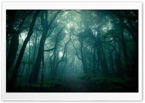 Dark Woods, Fog Ultra HD Wallpaper for 4K UHD Widescreen desktop, tablet & smartphone