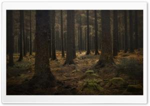 Dartmoor Forest Trees Ultra HD Wallpaper for 4K UHD Widescreen desktop, tablet & smartphone