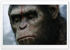 Dawn of the Planet of the Apes HD Wide Wallpaper for Widescreen
