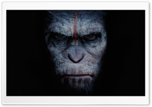 Dawn of the Planet of the Apes 2014 Movie HD Wide Wallpaper for Widescreen