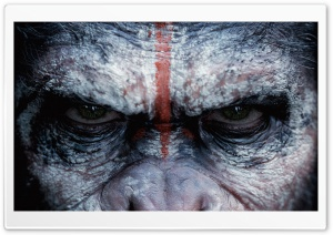 Dawn of the Planet of the Apes Caesar HD Wide Wallpaper for Widescreen