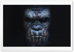 Dawn of the Planet of the Apes Koba HD Wide Wallpaper for Widescreen
