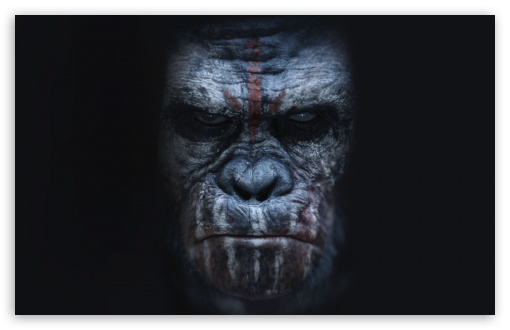 Dawn of the Planet of the Apes Koba ❤ 4K UHD Wallpaper for Wide 16:10 5:3 Widescreen WHXGA WQXGA WUXGA WXGA WGA ; 4K UHD 16:9 Ultra High Definition 2160p 1440p 1080p 900p 720p ; Standard 4:3 5:4 3:2 Fullscreen UXGA XGA SVGA QSXGA SXGA DVGA HVGA HQVGA ( Apple PowerBook G4 iPhone 4 3G 3GS iPod Touch ) ; Tablet 1:1 ; iPad 1/2/Mini ; Mobile 4:3 5:3 3:2 16:9 5:4 - UXGA XGA SVGA WGA DVGA HVGA HQVGA ( Apple PowerBook G4 iPhone 4 3G 3GS iPod Touch ) 2160p 1440p 1080p 900p 720p QSXGA SXGA ;
