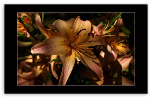 Day Lily HD wallpaper for Wide 16:10 5:3 Widescreen WHXGA WQXGA WUXGA WXGA WGA ; HD 16:9 High Definition WQHD QWXGA 1080p 900p 720p QHD nHD ; Standard 3:2 Fullscreen DVGA HVGA HQVGA devices ( Apple PowerBook G4 iPhone 4 3G 3GS iPod Touch ) ; Mobile 5:3 3:2 16:9 - WGA DVGA HVGA HQVGA devices ( Apple PowerBook G4 iPhone 4 3G 3GS iPod Touch ) WQHD QWXGA 1080p 900p 720p QHD nHD ;