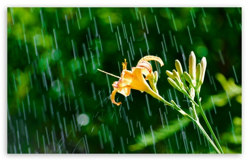 Daylily In The Rain HD wallpaper for Wide 16:10 5:3 Widescreen WHXGA WQXGA WUXGA WXGA WGA ; HD 16:9 High Definition WQHD QWXGA 1080p 900p 720p QHD nHD ; Standard 4:3 5:4 3:2 Fullscreen UXGA XGA SVGA QSXGA SXGA DVGA HVGA HQVGA devices ( Apple PowerBook G4 iPhone 4 3G 3GS iPod Touch ) ; Tablet 1:1 ; iPad 1/2/Mini ; Mobile 4:3 5:3 3:2 16:9 5:4 - UXGA XGA SVGA WGA DVGA HVGA HQVGA devices ( Apple PowerBook G4 iPhone 4 3G 3GS iPod Touch ) WQHD QWXGA 1080p 900p 720p QHD nHD QSXGA SXGA ; Dual 16:10 5:3 4:3 5:4 WHXGA WQXGA WUXGA WXGA WGA UXGA XGA SVGA QSXGA SXGA ;