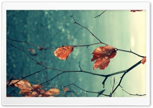 Dead Leaves Macro HD Wide Wallpaper for Widescreen