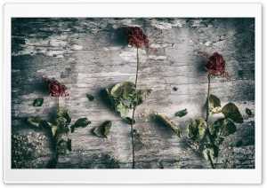 Dead Roses and a Fly HD Wide Wallpaper for Widescreen
