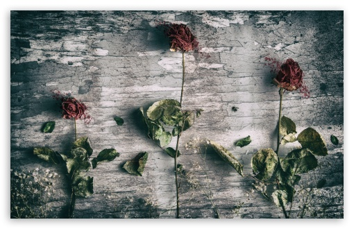 Dead Roses and a Fly ❤ 4K UHD Wallpaper for Wide 16:10 5:3 Widescreen WHXGA WQXGA WUXGA WXGA WGA ; 4K UHD 16:9 Ultra High Definition 2160p 1440p 1080p 900p 720p ; UHD 16:9 2160p 1440p 1080p 900p 720p ; Standard 4:3 5:4 3:2 Fullscreen UXGA XGA SVGA QSXGA SXGA DVGA HVGA HQVGA ( Apple PowerBook G4 iPhone 4 3G 3GS iPod Touch ) ; Smartphone 5:3 WGA ; iPad 1/2/Mini ; Mobile 4:3 5:3 3:2 16:9 5:4 - UXGA XGA SVGA WGA DVGA HVGA HQVGA ( Apple PowerBook G4 iPhone 4 3G 3GS iPod Touch ) 2160p 1440p 1080p 900p 720p QSXGA SXGA ;