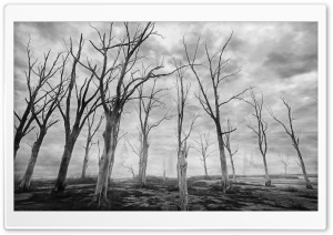 Dead Trees Black and White HD Wide Wallpaper for Widescreen