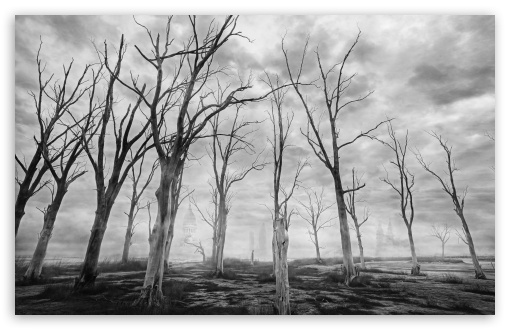 Dead Trees Black and White ❤ 4K UHD Wallpaper for Wide 16:10 5:3 Widescreen WHXGA WQXGA WUXGA WXGA WGA ; 4K UHD 16:9 Ultra High Definition 2160p 1440p 1080p 900p 720p ; UHD 16:9 2160p 1440p 1080p 900p 720p ; Standard 4:3 5:4 3:2 Fullscreen UXGA XGA SVGA QSXGA SXGA DVGA HVGA HQVGA ( Apple PowerBook G4 iPhone 4 3G 3GS iPod Touch ) ; Smartphone 3:2 5:3 DVGA HVGA HQVGA ( Apple PowerBook G4 iPhone 4 3G 3GS iPod Touch ) WGA ; Tablet 1:1 ; iPad 1/2/Mini ; Mobile 4:3 5:3 3:2 16:9 5:4 - UXGA XGA SVGA WGA DVGA HVGA HQVGA ( Apple PowerBook G4 iPhone 4 3G 3GS iPod Touch ) 2160p 1440p 1080p 900p 720p QSXGA SXGA ;