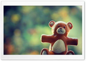 Dear Bear HD Wide Wallpaper for Widescreen
