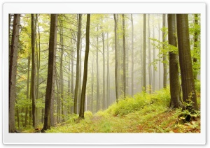 Deciduous Forests HD Wide Wallpaper for Widescreen