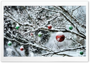 Decorated Tree Branches HD Wide Wallpaper for Widescreen