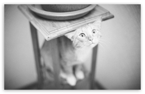 Decorative Cat UltraHD Wallpaper for Wide 16:10 5:3 Widescreen WHXGA WQXGA WUXGA WXGA WGA ; 8K UHD TV 16:9 Ultra High Definition 2160p 1440p 1080p 900p 720p ; UHD 16:9 2160p 1440p 1080p 900p 720p ; Standard 4:3 5:4 3:2 Fullscreen UXGA XGA SVGA QSXGA SXGA DVGA HVGA HQVGA ( Apple PowerBook G4 iPhone 4 3G 3GS iPod Touch ) ; Tablet 1:1 ; iPad 1/2/Mini ; Mobile 4:3 5:3 3:2 16:9 5:4 - UXGA XGA SVGA WGA DVGA HVGA HQVGA ( Apple PowerBook G4 iPhone 4 3G 3GS iPod Touch ) 2160p 1440p 1080p 900p 720p QSXGA SXGA ;