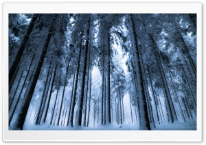 Deep Winter Forest HD Wide Wallpaper for 4K UHD Widescreen desktop & smartphone