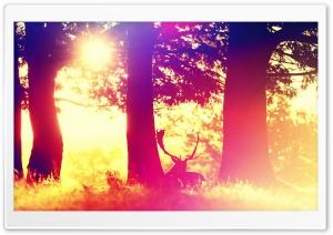 Deer Ultra HD Wallpaper for 4K UHD Widescreen desktop, tablet & smartphone