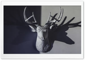 Deer Head Sculpture HD Wide Wallpaper for Widescreen