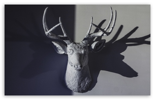 Deer Head Sculpture ❤ 4K UHD Wallpaper for Wide 16:10 5:3 Widescreen WHXGA WQXGA WUXGA WXGA WGA ; 4K UHD 16:9 Ultra High Definition 2160p 1440p 1080p 900p 720p ; UHD 16:9 2160p 1440p 1080p 900p 720p ; Standard 4:3 5:4 3:2 Fullscreen UXGA XGA SVGA QSXGA SXGA DVGA HVGA HQVGA ( Apple PowerBook G4 iPhone 4 3G 3GS iPod Touch ) ; Tablet 1:1 ; iPad 1/2/Mini ; Mobile 4:3 5:3 3:2 16:9 5:4 - UXGA XGA SVGA WGA DVGA HVGA HQVGA ( Apple PowerBook G4 iPhone 4 3G 3GS iPod Touch ) 2160p 1440p 1080p 900p 720p QSXGA SXGA ;