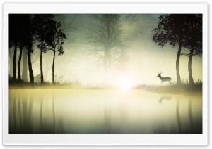 Deer Near A Lake HD Wide Wallpaper for Widescreen